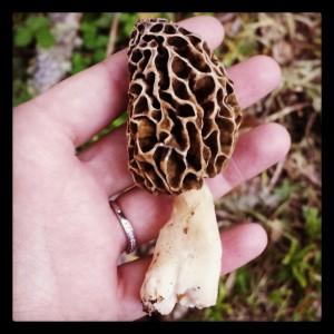 A Morel Mushroom!!