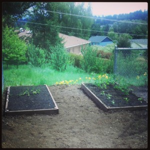 Two of our four raised beds. Tomatoes, peppers, and lots of seeds just went down!
