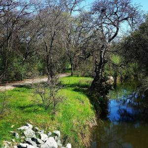 Trails running through a preserved area, along a creek that serves as a salmon run.